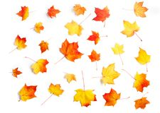 在白色背景隔绝的许多秋天槭树叶子 免版税图库摄影