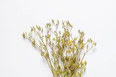 在白色背景隔绝的野花装饰 库存照片