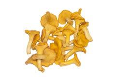 在白色背景隔绝的黄蘑菇蘑菇 免版税库存照片