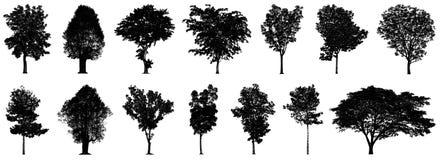 在白色背景隔绝的黑树剪影收藏 库存例证