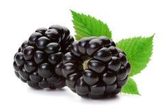 在白色背景隔绝的黑莓 图库摄影