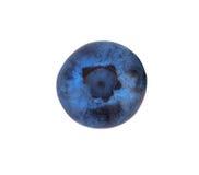 在白色背景隔绝的一个开胃蓝莓 一个唯一水多的蓝莓的一张顶视图 健康,有机,自然概念 图库摄影