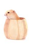 在白色背景隔绝的一个木碗的小的滑稽的仓鼠 免版税库存照片