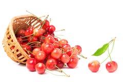 在白色背景隔绝的一个柳条筐的桃红色樱桃 库存照片
