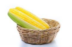 在白色背景隔绝的一个玉米穗 免版税库存图片