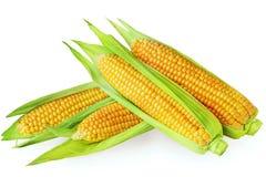 在白色背景隔绝的一个玉米穗 免版税库存照片