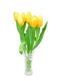 在白色背景隔绝的一个玻璃花瓶的黄色郁金香,春天开花 免版税库存图片
