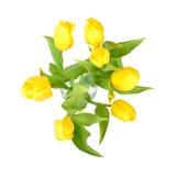 在白色背景隔绝的一个玻璃花瓶的黄色郁金香,黄色春天开花顶视图 免版税库存图片