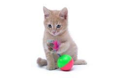 在白色背景隔绝的一只红色小猫的画象 免版税库存图片