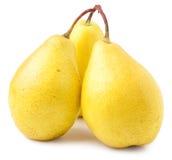 在白色背景隔绝的三个成熟黄色梨 库存图片