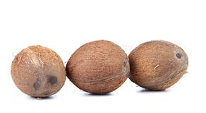 在白色背景隔绝的三个椰子 库存图片