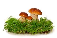 在白色背景隔绝的三个蘑菇 免版税库存照片