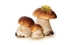 在白色背景隔绝的三个蘑菇 免版税库存图片