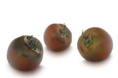 在白色背景隔绝的三个Kumato蕃茄 免版税库存照片