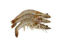 在白色背景隔绝的三只新鲜的虾 免版税库存照片