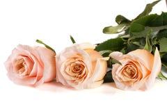 在白色背景隔绝的三朵新鲜的米黄玫瑰 免版税库存照片
