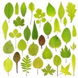 在白色背景隔绝的不同的绿色叶子 免版税库存照片