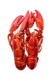在白色背景隔绝的两只红色龙虾 免版税库存图片