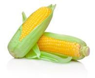 在白色背景隔绝的两根新鲜的玉米棒子 免版税库存图片