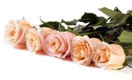 在白色背景隔绝的五朵新鲜的米黄玫瑰 免版税图库摄影