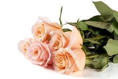 在白色背景隔绝的五朵新鲜的米黄玫瑰 库存图片