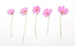 在白色背景隔绝的五朵桃红色花 免版税库存图片
