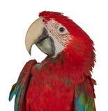 在白色背景隔绝的五颜六色的金刚鹦鹉 免版税库存图片