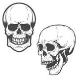 在白色背景隔绝的传染媒介头骨的套 向量 免版税图库摄影