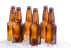 在白色背景隔绝的冰冷的被装瓶的啤酒六块肌肉  免版税图库摄影