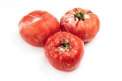 在白色背景隔绝的冷冻蕃茄 免版税库存图片