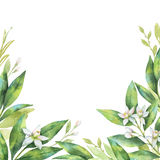 在白色背景隔绝的分支和花果子桔子的水彩手画卡片 向量例证