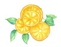 在白色背景隔绝的切片橙色果子和绿色叶子,与裁减路线,水彩例证 库存照片