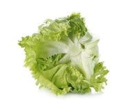 在白色背景隔绝的卷心莴苣菜 库存照片