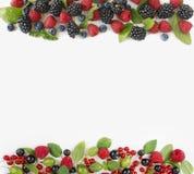 在白色背景隔绝的各种各样的新鲜的夏天莓果 图库摄影