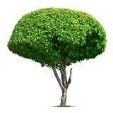 圆的装饰树 免版税库存图片