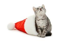 在白色背景隔绝的圣诞节帽子的美丽的猫 免版税图库摄影