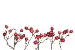 在白色背景隔绝的圣诞节装饰红色莓果 免版税库存照片