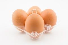 在白色背景隔绝的塑料盘子的四个鸡蛋 库存图片
