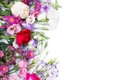 在白色背景隔绝的多彩多姿的南北美洲香草花 免版税库存照片
