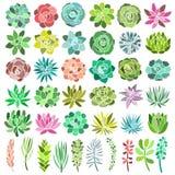 在白色背景隔绝的多汁植物集合 向量 免版税库存照片