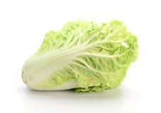 在白色背景隔绝的大白菜 免版税图库摄影