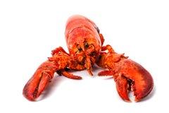 在白色背景隔绝的大红色龙虾 免版税库存图片