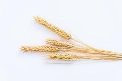 在白色背景隔绝的大麦五谷 免版税图库摄影