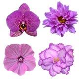 在白色背景隔绝的套四朵花 免版税库存照片