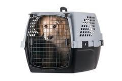 在白色背景隔绝的宠物载体的狗 库存照片