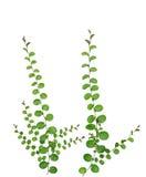 在白色背景隔绝的小爬行物植物,裁减路线 免版税库存图片