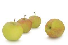 在白色背景隔绝的小苹果 免版税图库摄影
