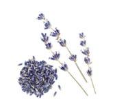 在白色背景隔绝的干淡紫色 免版税库存图片