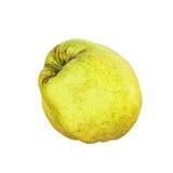 在白色背景隔绝的开胃成熟柑橘 库存照片