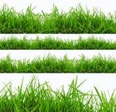 在白色背景隔绝的新春天绿草全景。 免版税图库摄影